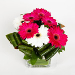 Gerberas in a glass vase