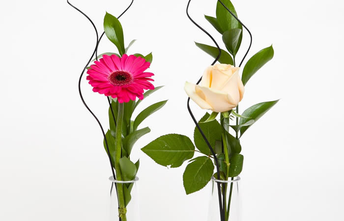 Single Flower in Glass Vase  sc 1 st  Hornby Florist & Hornby Florist » Single Flower in Glass Vase